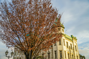 川越の街並みと紅葉の樹木の写真素材 [FYI01244721]
