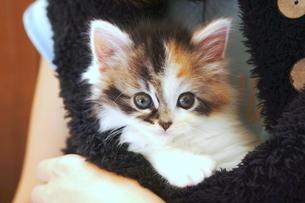 抱っこされる子猫の写真素材 [FYI01244934]