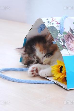 大好きな袋で寝る子猫の写真素材 [FYI01244936]