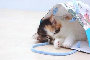 大好きな袋で寝る子猫の写真素材 [FYI01244938]