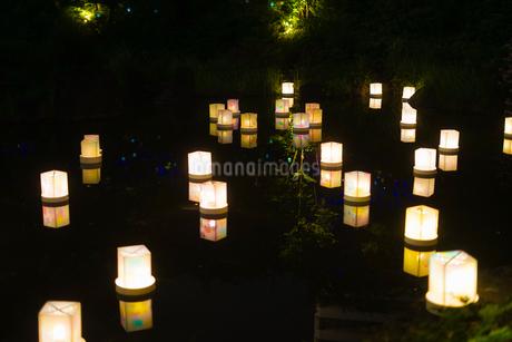 灯篭流しのイメージの写真素材 [FYI01245002]