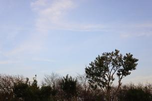 千葉県の郊外の町の風景と青い空の写真素材 [FYI01245018]