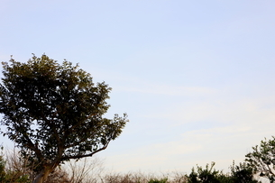 千葉県の郊外の町の風景と青い空の写真素材 [FYI01245019]
