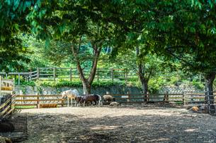 馬と羊がいる風景の写真素材 [FYI01245052]