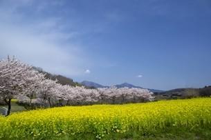 春の風景の写真素材 [FYI01245287]