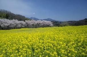 春の風景の写真素材 [FYI01245288]