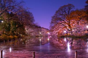 夜の井の頭公園の写真素材 [FYI01245307]