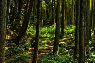 森の小径の写真素材 [FYI01245347]