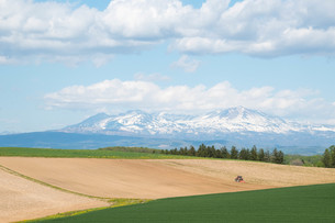 春の畑と残雪の山並み 大雪山の写真素材 [FYI01245362]