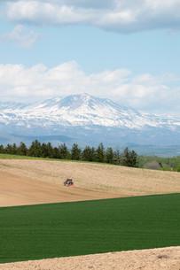 春の畑と残雪の山並み 大雪山の写真素材 [FYI01245363]