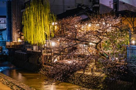 京都・先斗町の街並みと桜の写真素材 [FYI01245479]