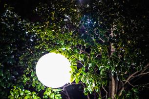 木の葉の中にある光るオブジェの写真素材 [FYI01245515]