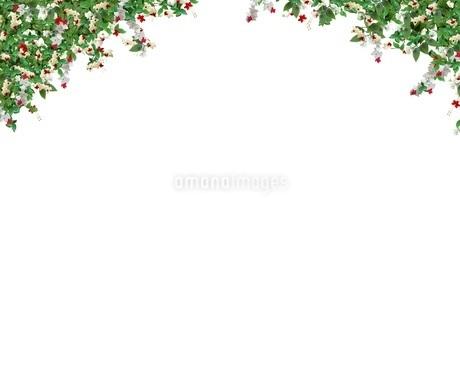 植物の写真素材 [FYI01245846]
