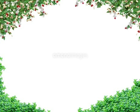 植物の写真素材 [FYI01245847]