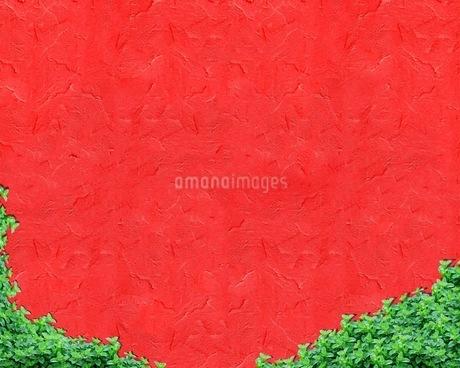 植物の写真素材 [FYI01245848]