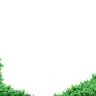 植物の写真素材 [FYI01245851]