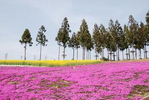 日本の春の風景の写真素材 [FYI01245860]
