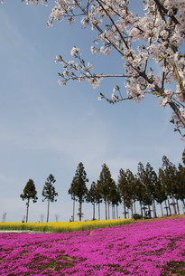 日本の春の風景の写真素材 [FYI01245861]