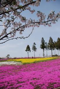 日本の春の風景の写真素材 [FYI01245863]