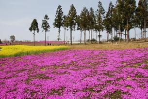 日本の春の風景の写真素材 [FYI01245864]