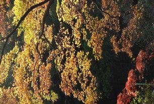 紅葉の写真素材 [FYI01245884]