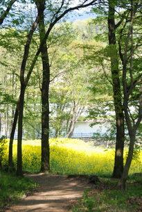 春の森林の写真素材 [FYI01245888]