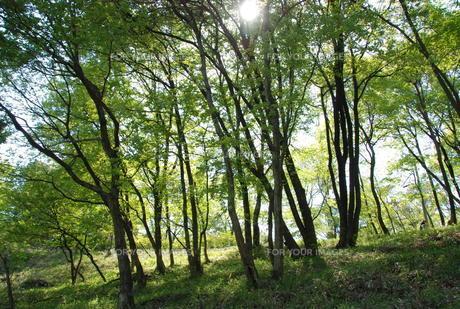 春の木漏れ日の写真素材 [FYI01245889]