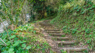 春の館山城跡の風景の写真素材 [FYI01246018]