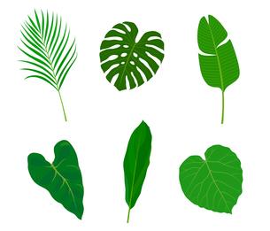 南国植物 イラストセットのイラスト素材 [FYI01246030]