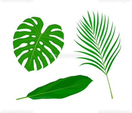 南国植物 イラストセットのイラスト素材 [FYI01246031]