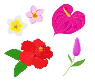 南国の花 イラストセットのイラスト素材 [FYI01246032]