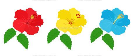 南国の花 ハイビスカスのイラスト素材 [FYI01246034]