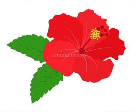 南国の花 ハイビスカスのイラスト素材 [FYI01246035]