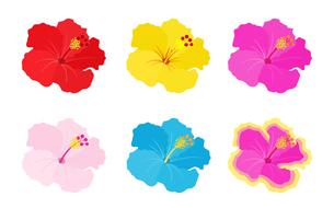 南国の花 ハイビスカスのイラスト素材 [FYI01246036]