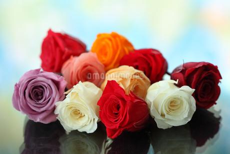薔薇の写真素材 [FYI01246235]