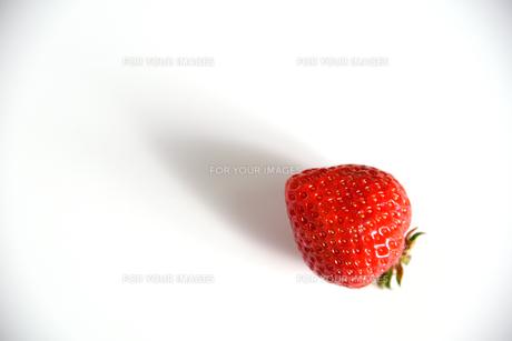 イチゴ 白バックの写真素材 [FYI01246570]