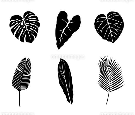熱帯植物 アイコンセットのイラスト素材 [FYI01246576]