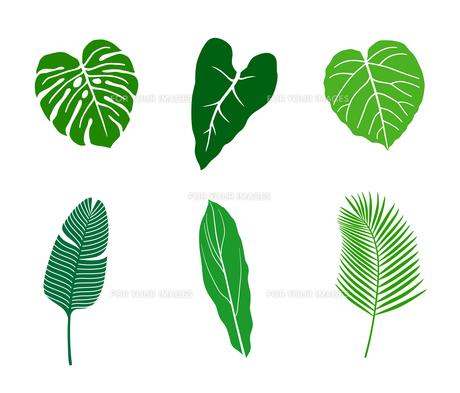 熱帯植物 アイコンセットのイラスト素材 [FYI01246578]