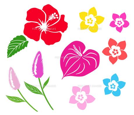 南国の花 アイコンセットのイラスト素材 Fyi ストックフォトのamanaimages Plus