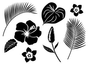 南国の花 アイコンセットのイラスト素材 [FYI01246581]