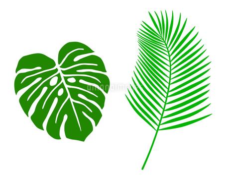 熱帯植物 アイコンセットのイラスト素材 [FYI01246586]