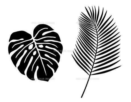 熱帯植物 アイコンセットのイラスト素材 [FYI01246587]