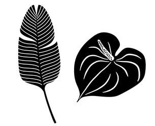 熱帯植物 アイコンセットのイラスト素材 [FYI01246589]