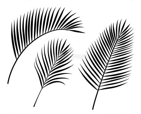 ヤシの葉 イラストセットのイラスト素材 [FYI01246591]