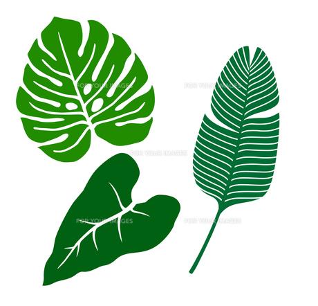 熱帯植物 アイコンセットのイラスト素材 [FYI01246592]