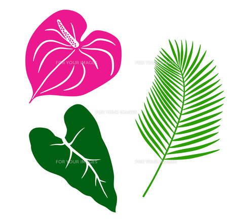 熱帯植物 アイコンセットのイラスト素材 [FYI01246593]