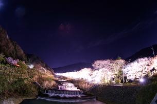 宮城野早川堤の桜の写真素材 [FYI01246678]