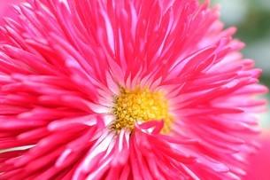 春の花壇のミクロな世界の写真素材 [FYI01246827]