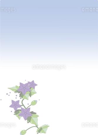 喪中ハガキ,桔梗のイラスト素材 [FYI01246852]
