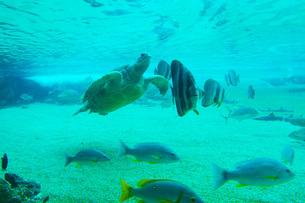 南国の海イメージの写真素材 [FYI01246893]